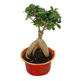 Bonsai Saksı